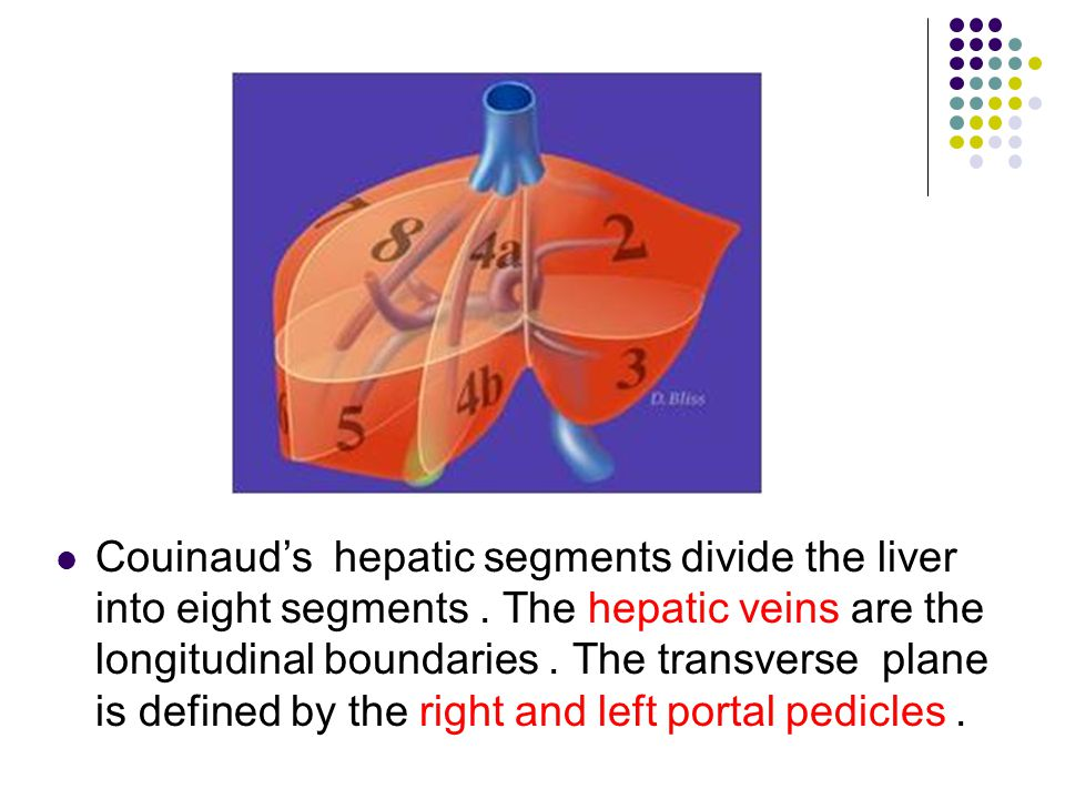 Couinaud's hepatic segments divide the liver into eight segments