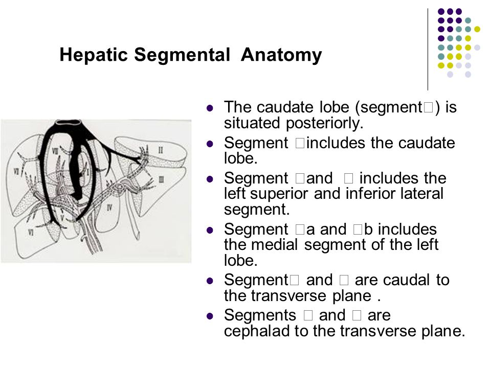 Hepatic Segmental Anatomy