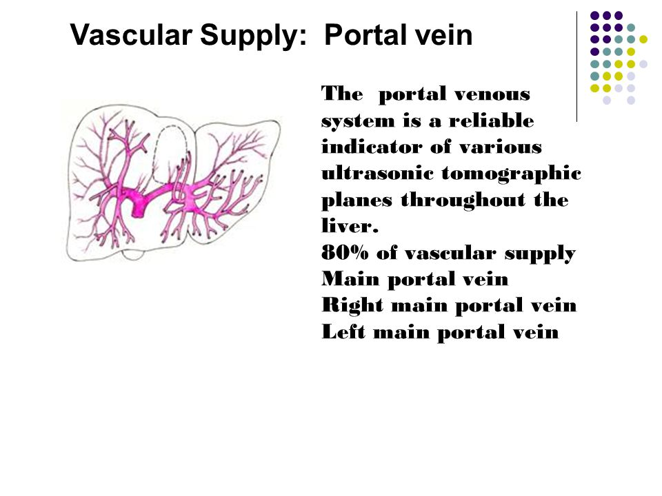 Vascular Supply: Portal vein