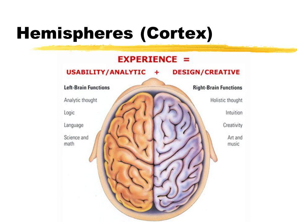 Hemispheres (Cortex)