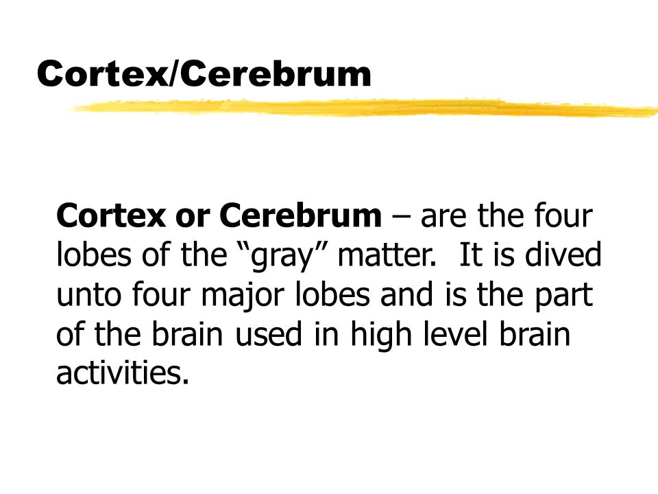 Cortex/Cerebrum