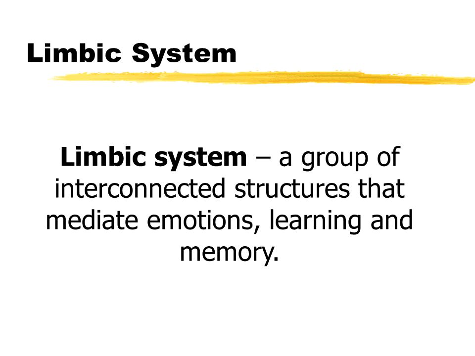 Limbic System Limbic system – a group of interconnected structures that mediate emotions, learning and memory.