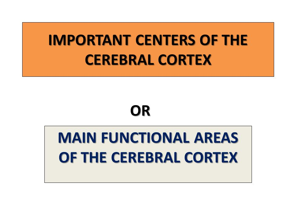 IMPORTANT CENTERS OF THE CEREBRAL CORTEX