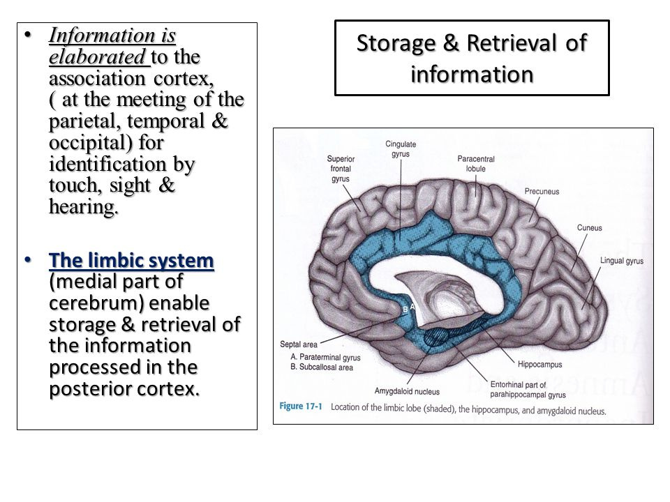 Storage & Retrieval of information