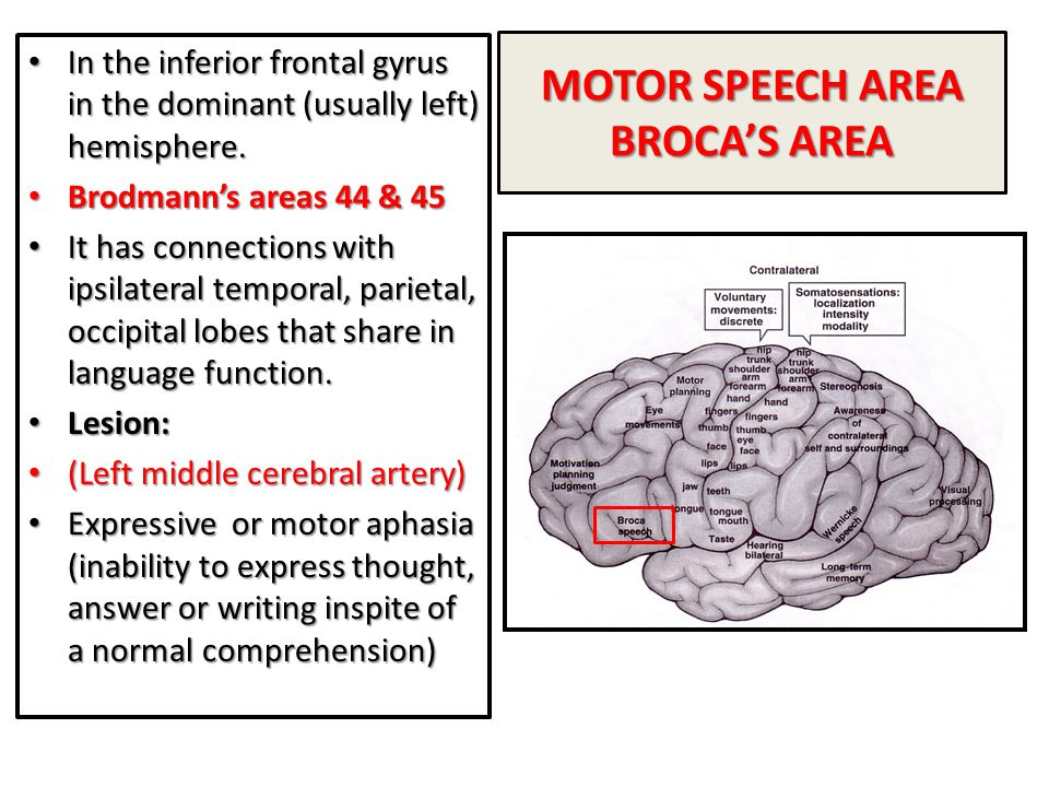 MOTOR SPEECH AREA BROCA'S AREA