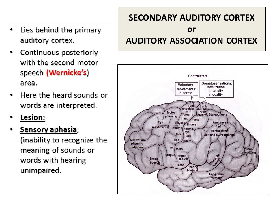 SECONDARY AUDITORY CORTEX or AUDITORY ASSOCIATION CORTEX