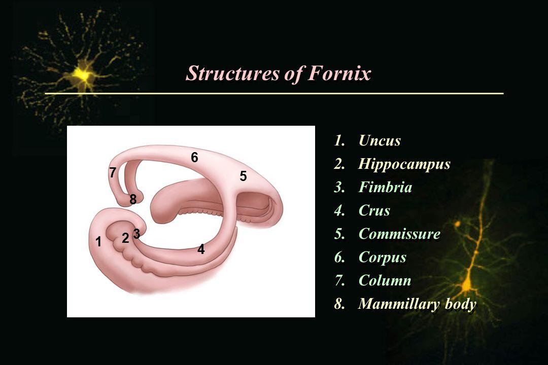 Structures of Fornix Uncus Hippocampus Fimbria Crus Commissure Corpus