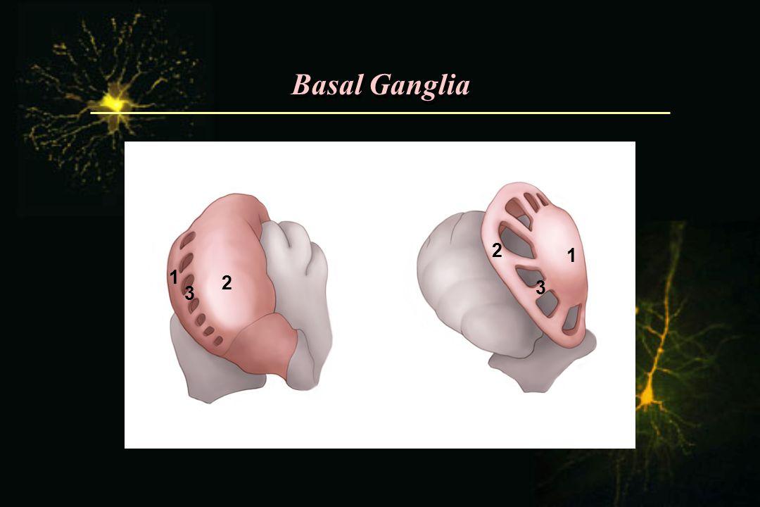 Basal Ganglia 2 1 1 2 3 3