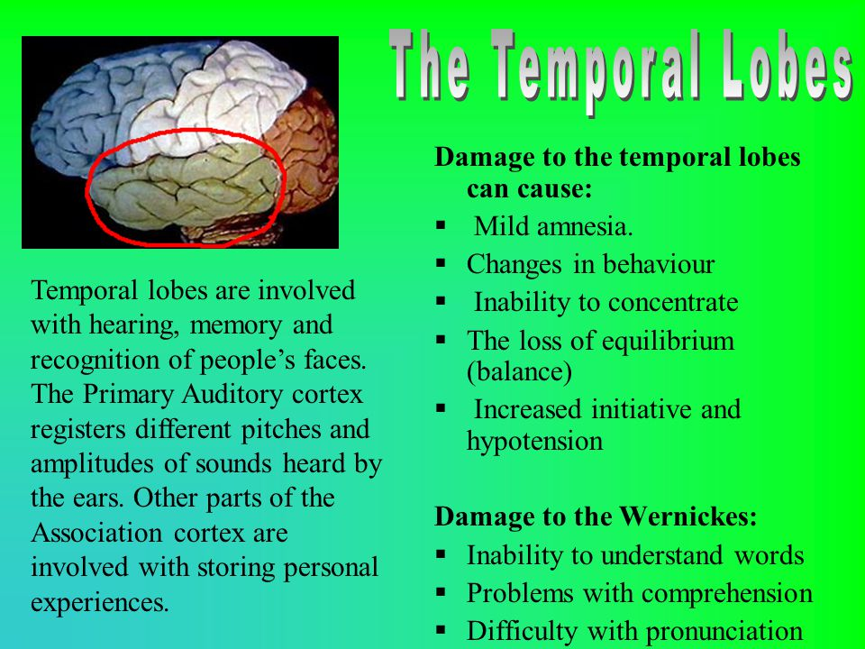 The Temporal Lobes Damage to the temporal lobes can cause: