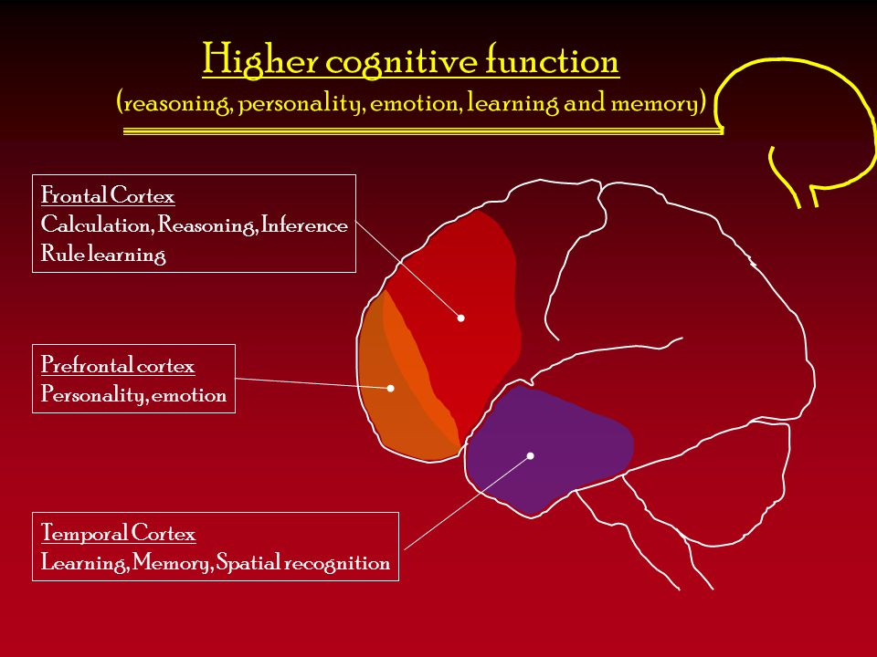 Higher cognitive function (reasoning, personality, emotion, learning and memory)