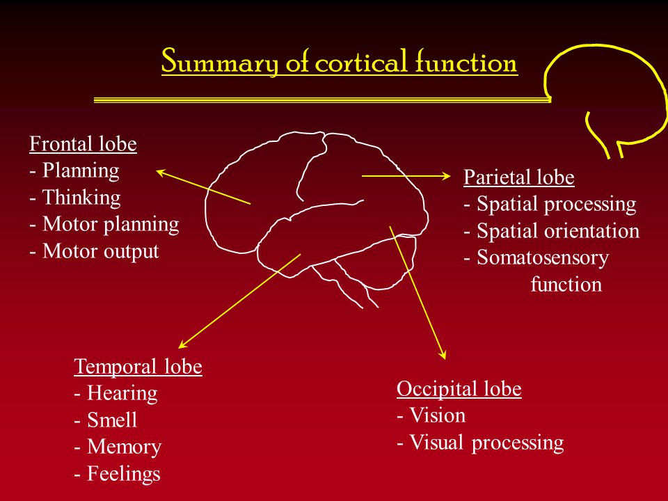 Summary of cortical function