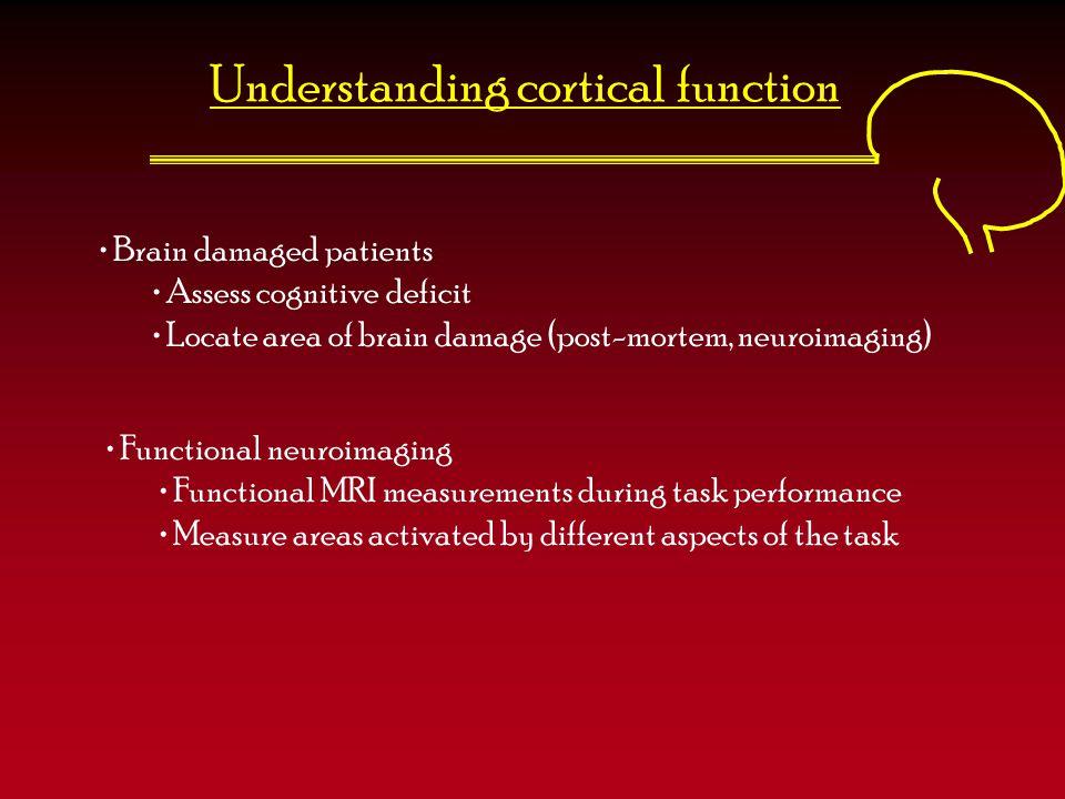 Understanding cortical function