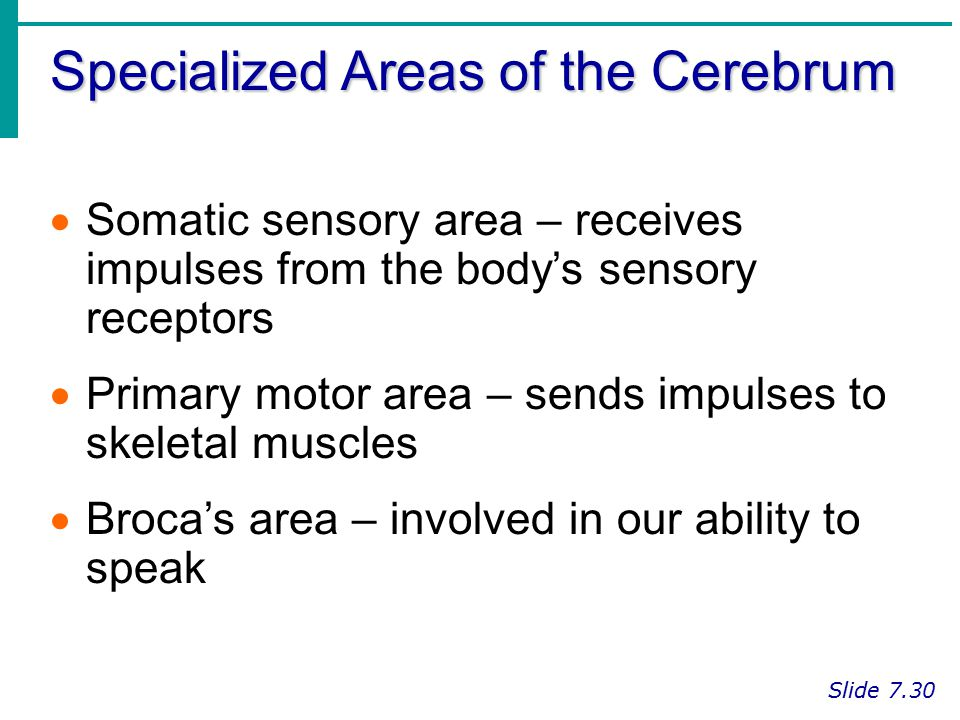 Specialized Areas of the Cerebrum
