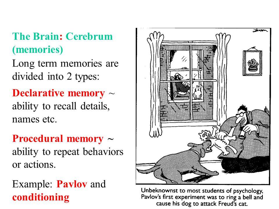 The Brain: Cerebrum (memories)