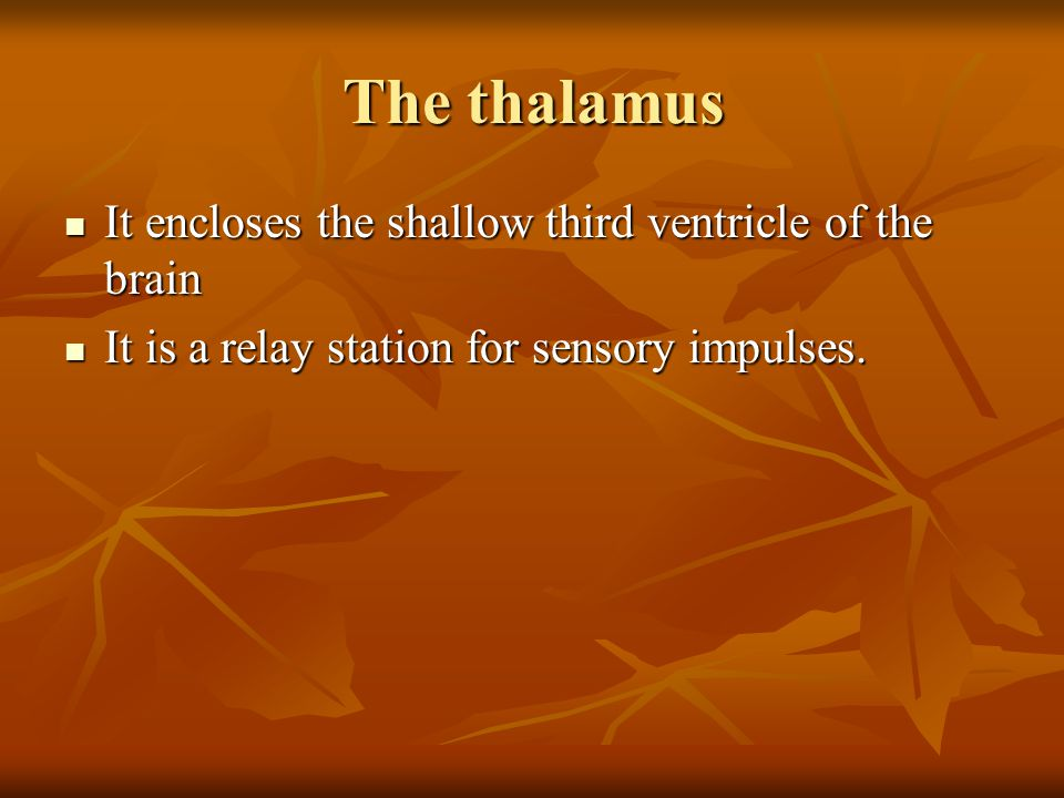 The thalamus It encloses the shallow third ventricle of the brain