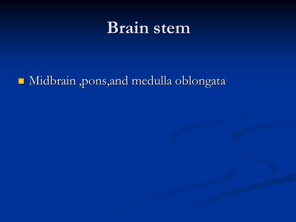 Brain stem Midbrain ,pons,and medulla oblongata