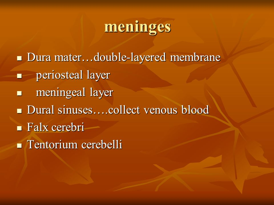 meninges Dura mater…double-layered membrane periosteal layer