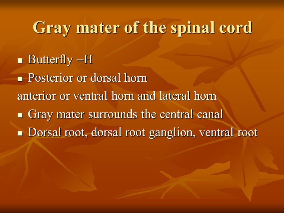 Gray mater of the spinal cord