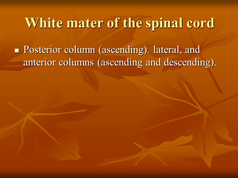 White mater of the spinal cord