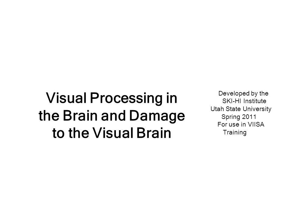 The Visual Brain The brain devotes more territory to vision than all other senses combined (40%)