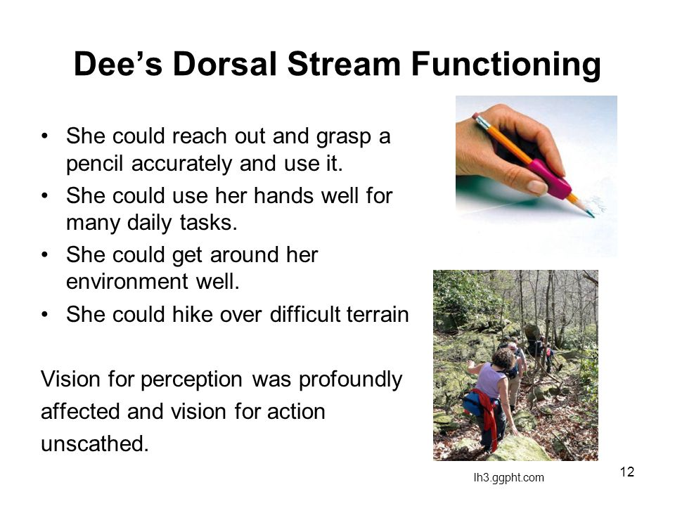 Dee's Ventral Stream Function (15 years later)