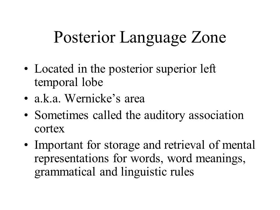 Posterior Language Zone