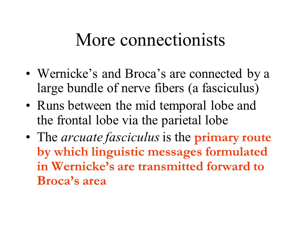 More connectionists Wernicke's and Broca's are connected by a large bundle of nerve fibers (a fasciculus)