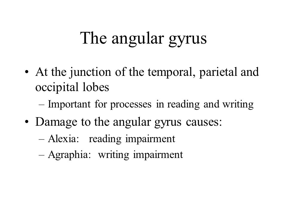 The angular gyrus At the junction of the temporal, parietal and occipital lobes. Important for processes in reading and writing.