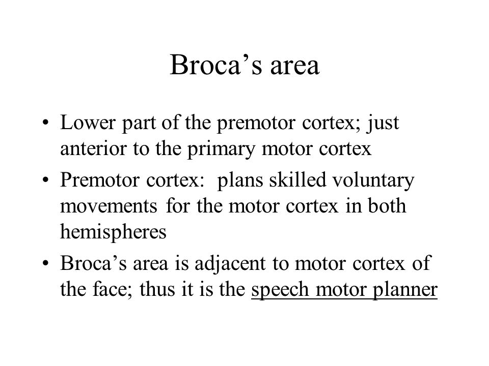 Broca's area Lower part of the premotor cortex; just anterior to the primary motor cortex.