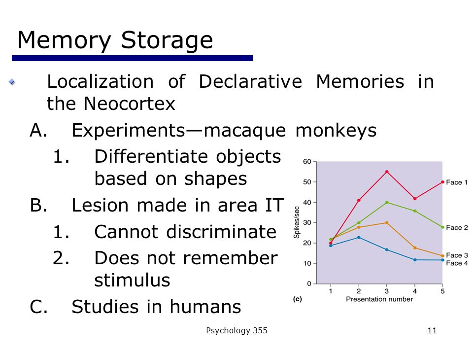 Memory Storage Localization of Declarative Memories in the Neocortex