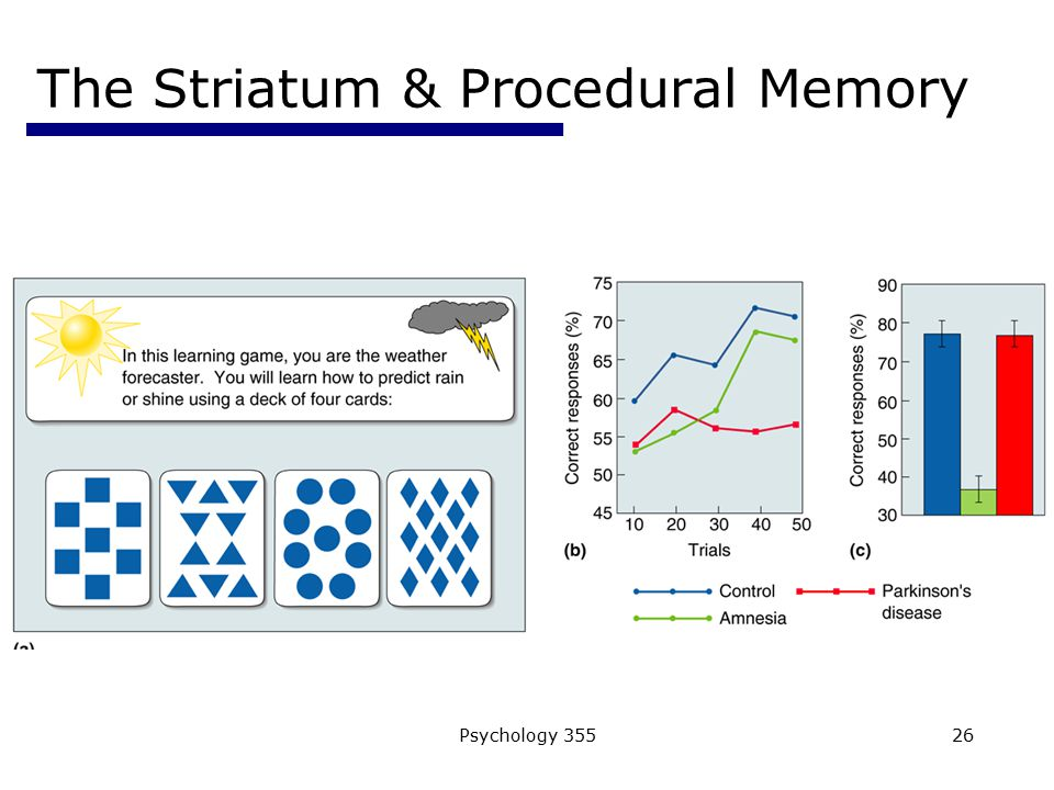 The Striatum & Procedural Memory