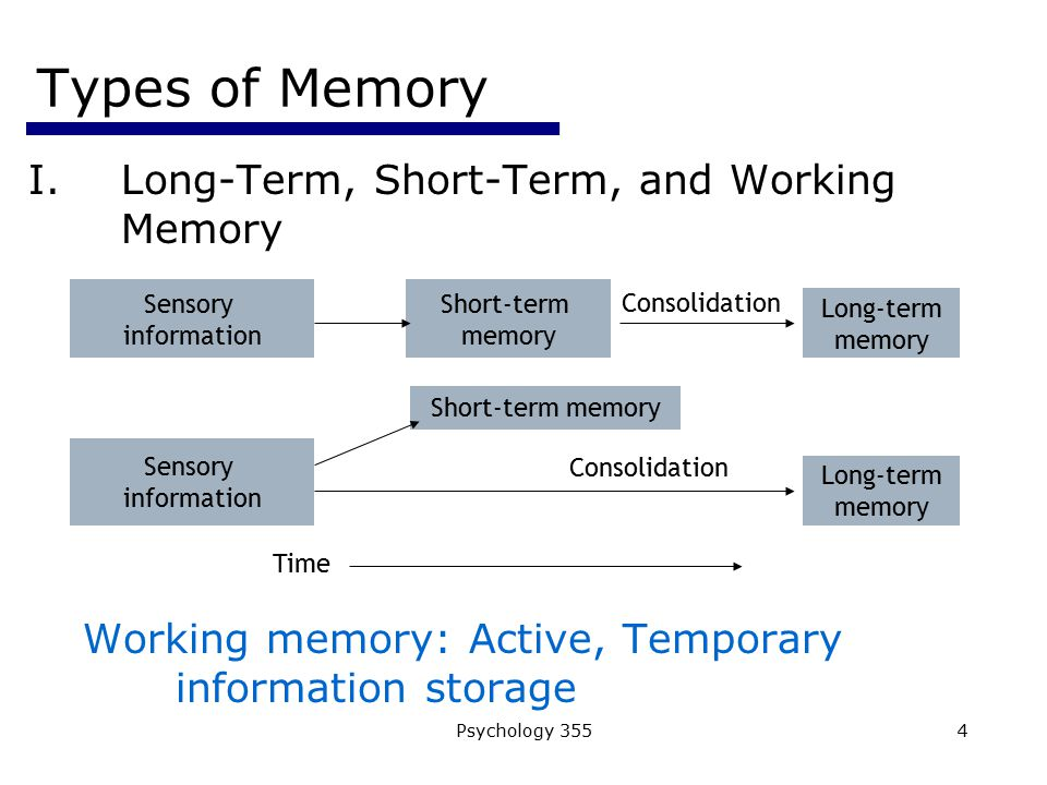 Types of Memory Long-Term, Short-Term, and Working Memory