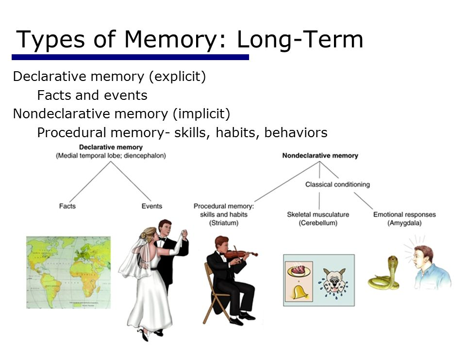 Types of Memory: Long-Term