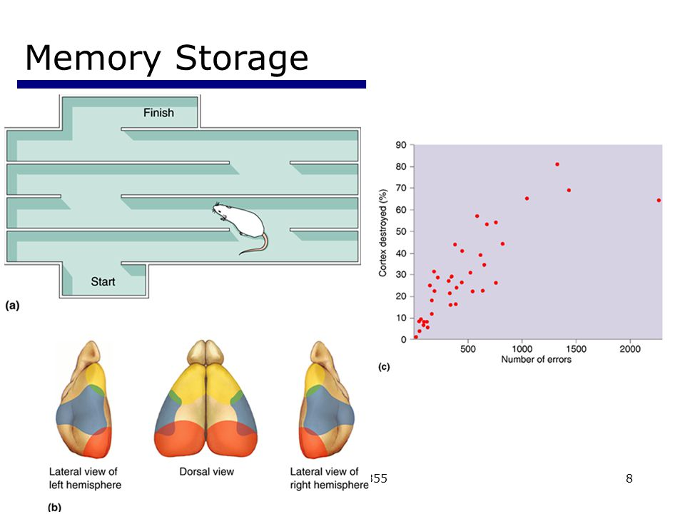 Memory Storage Psychology 355