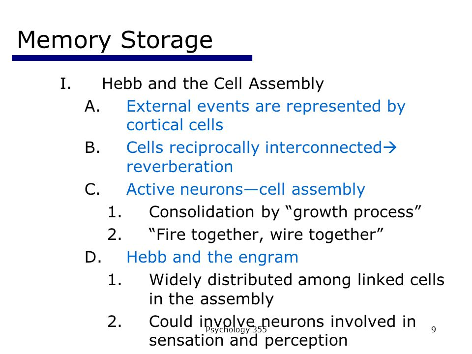 Memory Storage Hebb and the Cell Assembly