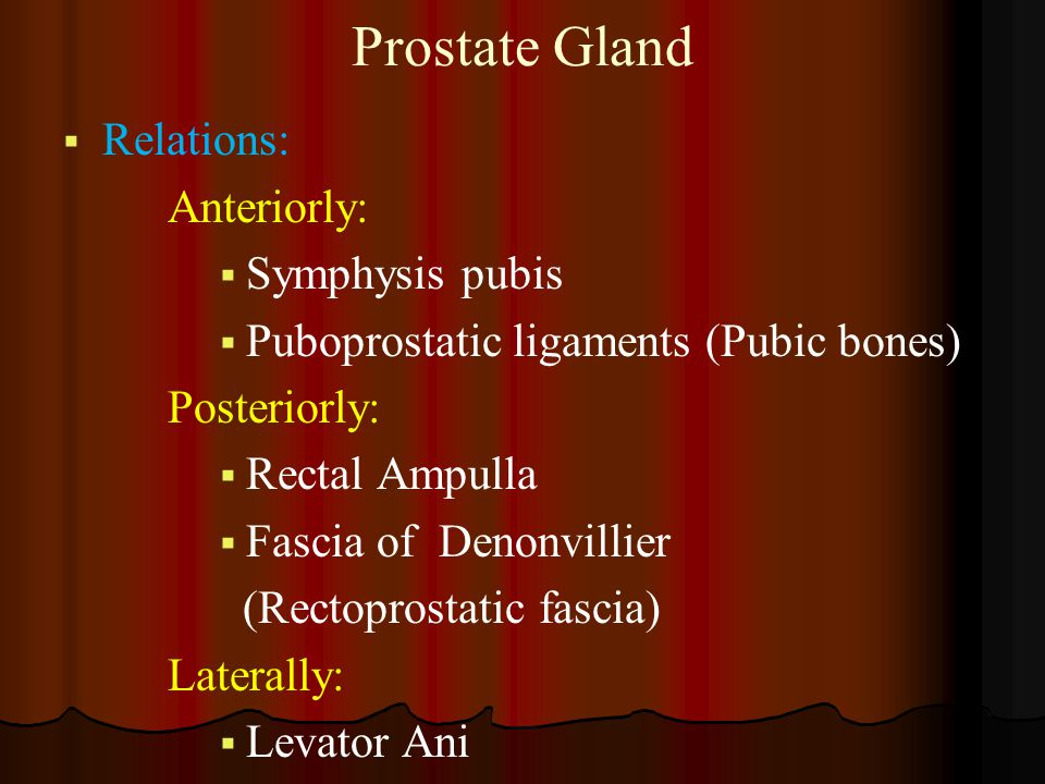 Prostate Gland Relations: Anteriorly: Symphysis pubis