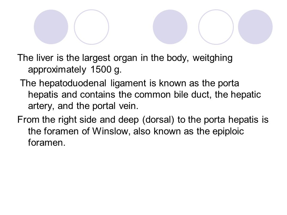 The liver is the largest organ in the body, weitghing approximately 1500 g.