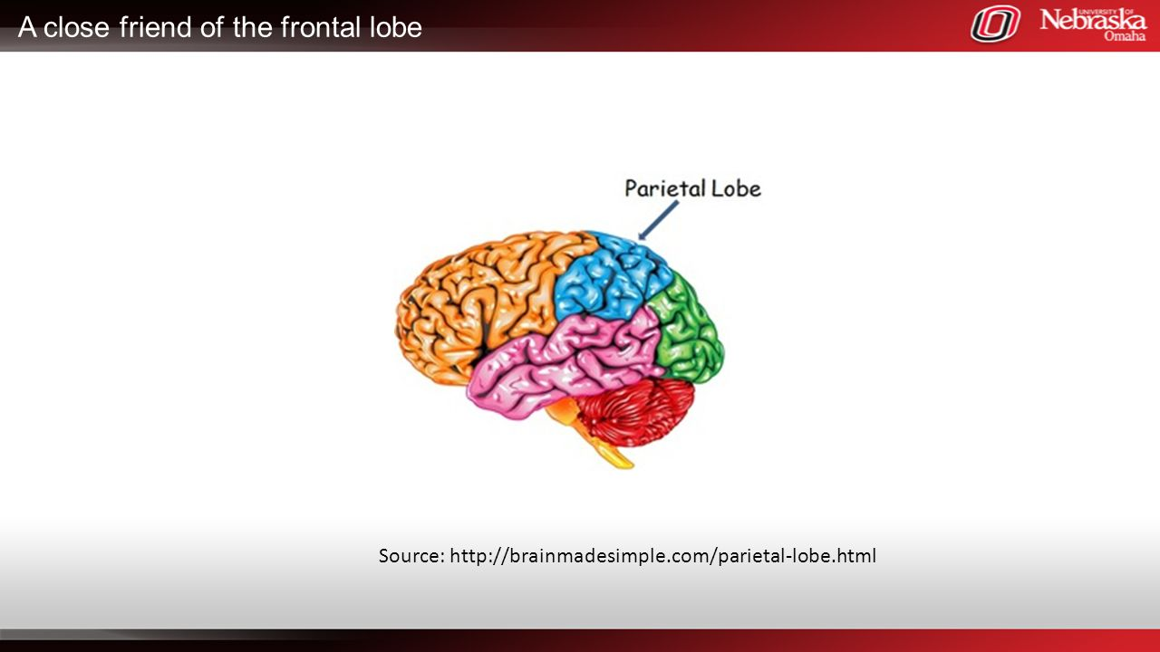 A close friend of the frontal lobe
