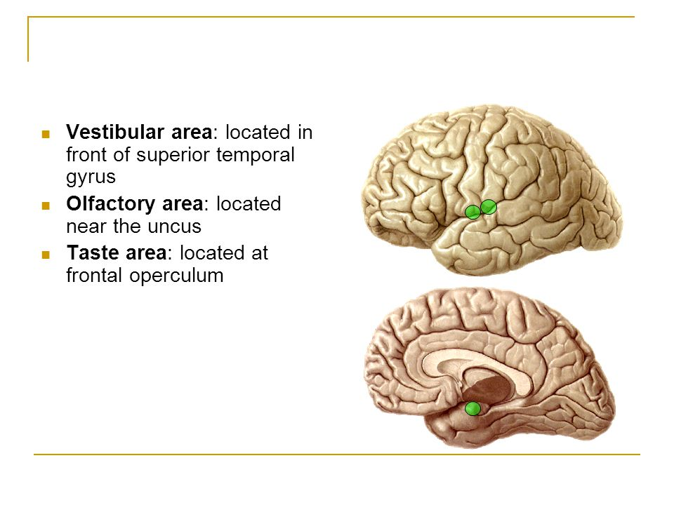 Vestibular area: located in front of superior temporal gyrus