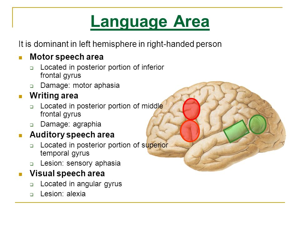 Language Area It is dominant in left hemisphere in right-handed person