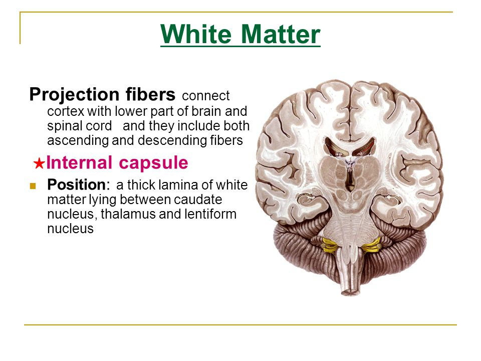 White Matter Projection fibers connect cortex with lower part of brain and spinal cord and they include both ascending and descending fibers.