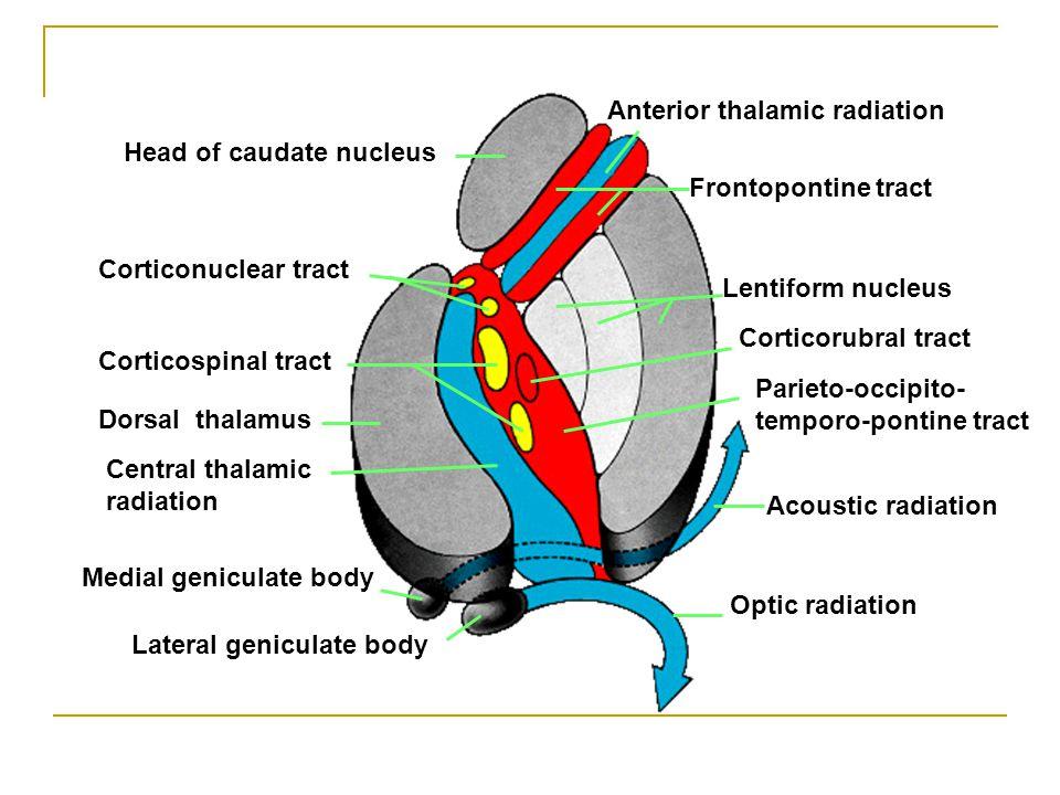 Anterior thalamic radiation