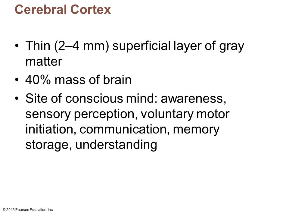 Thin (2–4 mm) superficial layer of gray matter 40% mass of brain