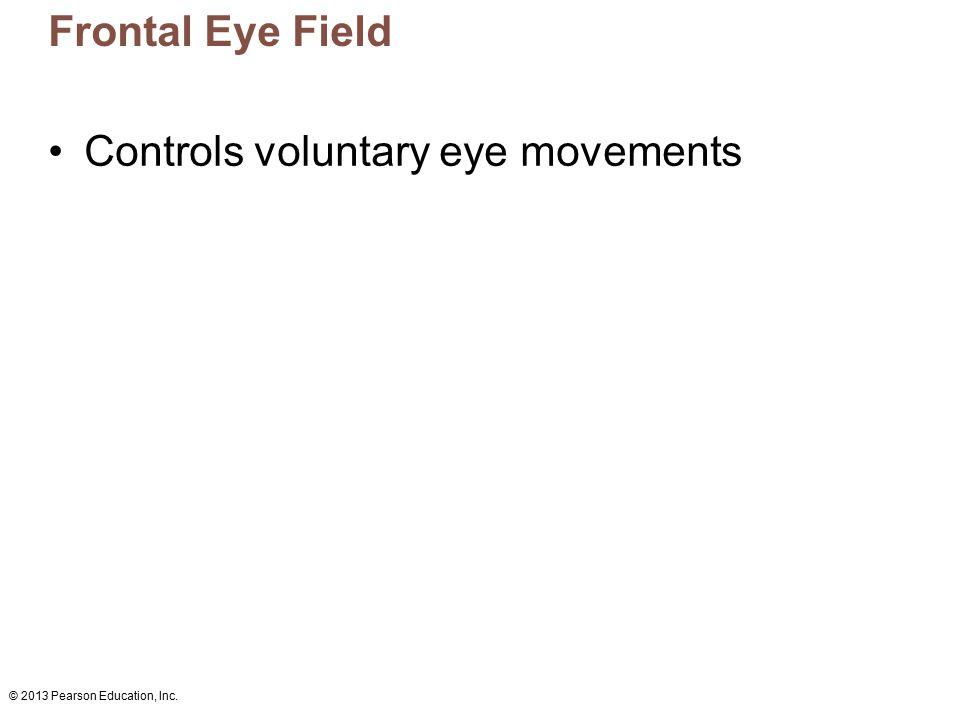 Controls voluntary eye movements
