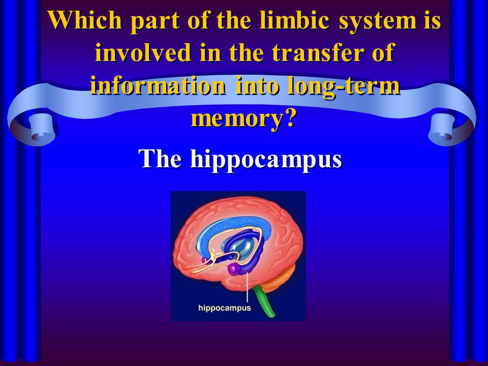 Which part of the limbic system is involved in the transfer of information into long-term memory