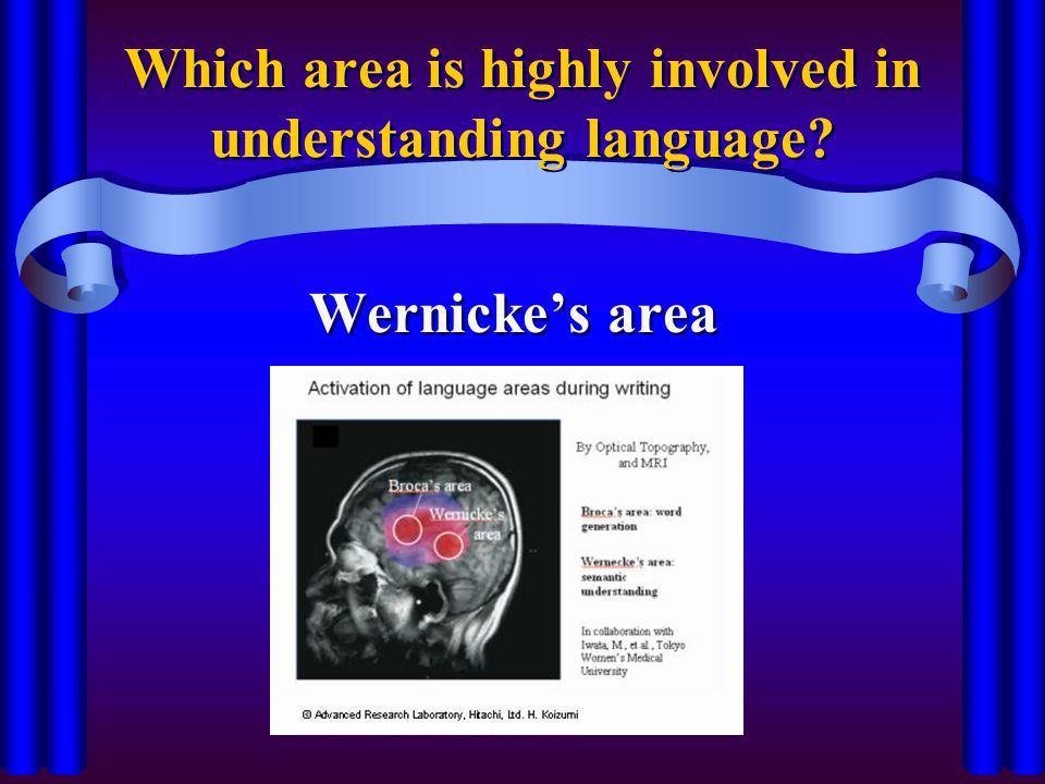 Which area is highly involved in understanding language