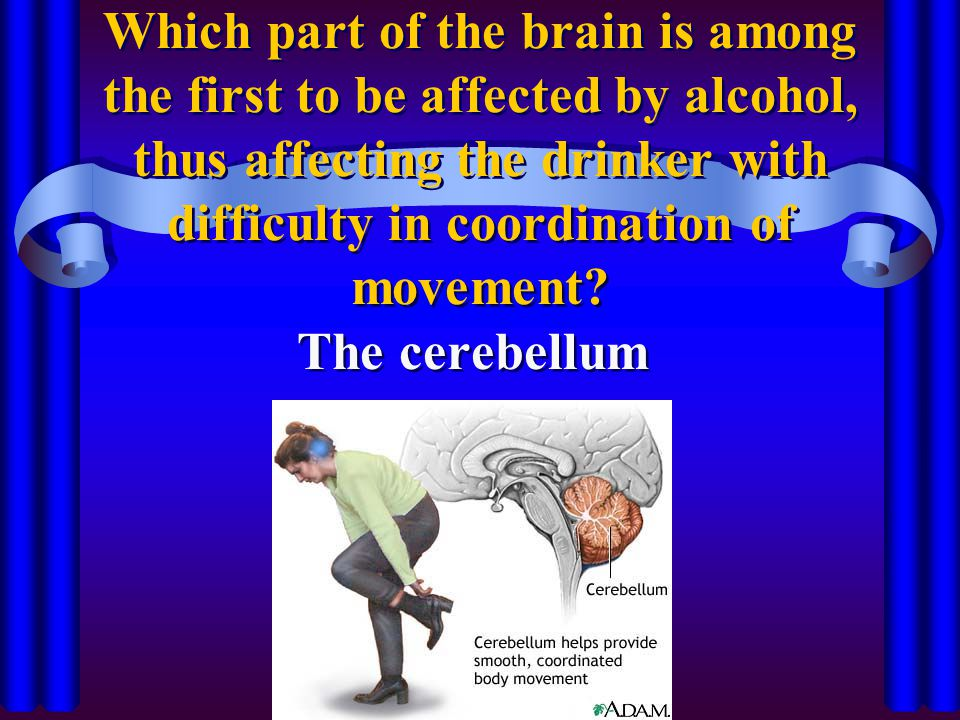 Which part of the brain is among the first to be affected by alcohol, thus affecting the drinker with difficulty in coordination of movement
