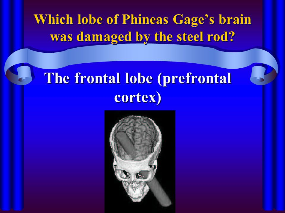 Which lobe of Phineas Gage's brain was damaged by the steel rod