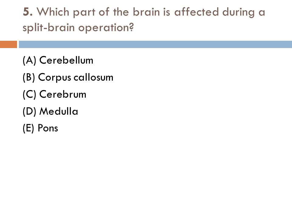 5. Which part of the brain is affected during a split-brain operation