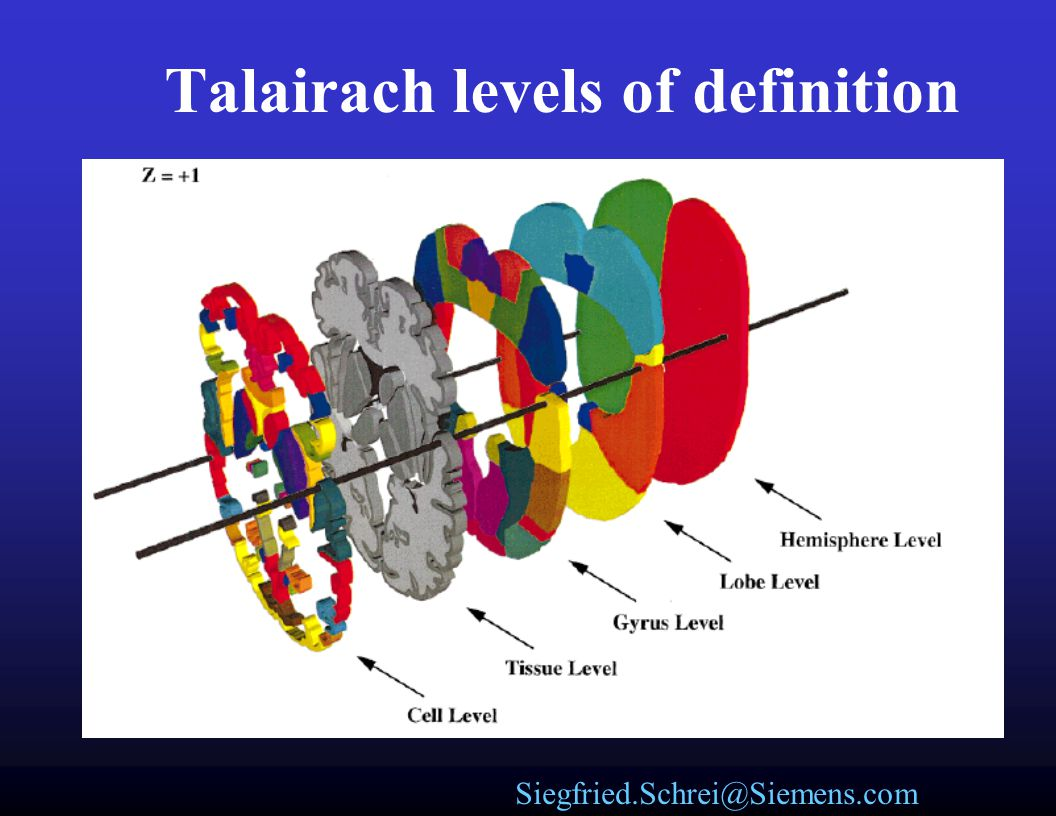 Talairach levels of definition